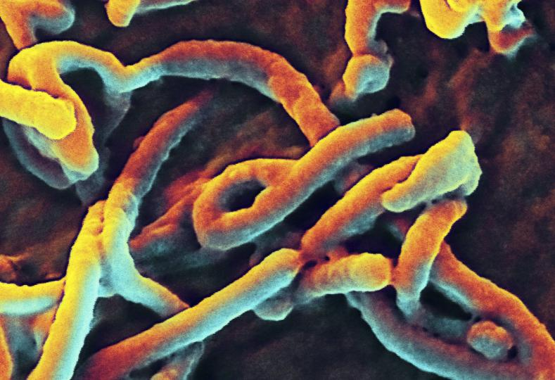 Yale-study-predicts-huge-increase-in-Ebola-cases-in-Liberia