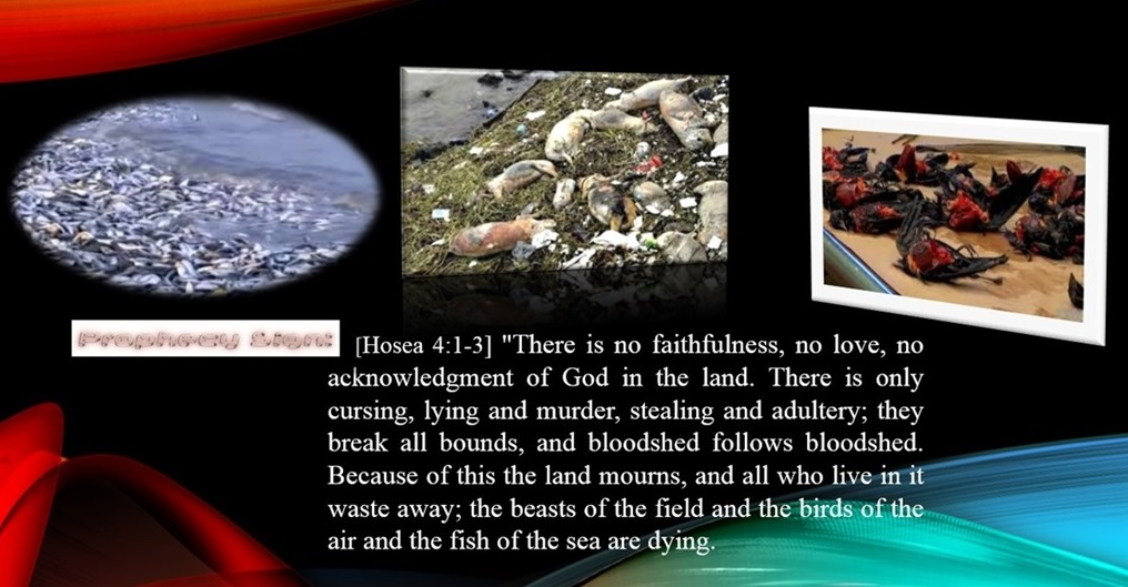 Image result for birds, fish, and animals dying